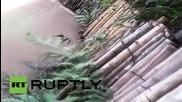 В Перу хвърлиха жива котка за храна на крокодили