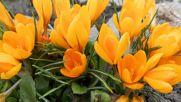 Пролетен валс ♫ ♪ ♫ ♩ Chopin- Spring Waltz
