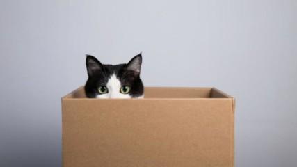 Защо котките са луди по кутии кашони и всякакви тесни пространства