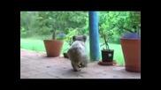 малка коала се бие с куче