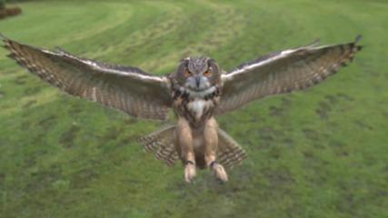 Птица Размахва Криле - Slow Motion