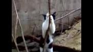 Котка На Пилон - Смях