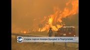 Разрастващ се горски пожар в Калифорния застрашава гигантски секвои