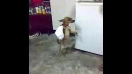 Куче играе хоро - смях