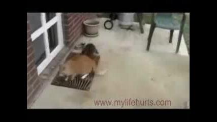 Коте нападнато От Заек