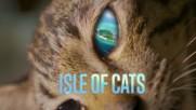 Островът на котките