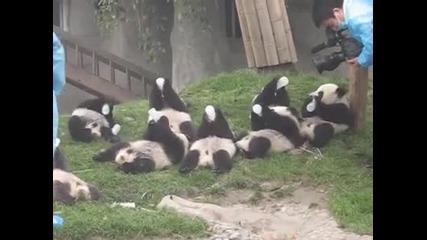 Хранене на Бебета Панди