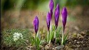 Китаро - Пролет е...
