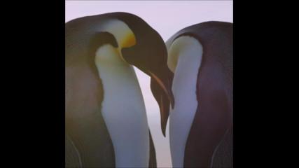 Императорските пингвини