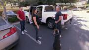Да научим куче да се качва само в пикап | Любимците на Америка със Сизър Милан | NG Wild Bulgaria