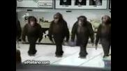 Танца на маймунките