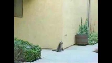 Котката Паяк