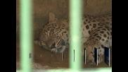 Повече вода спасява животните в столичния зоопарк от горещините