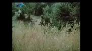 Панайот Панайотов - Време Е, Изглежда