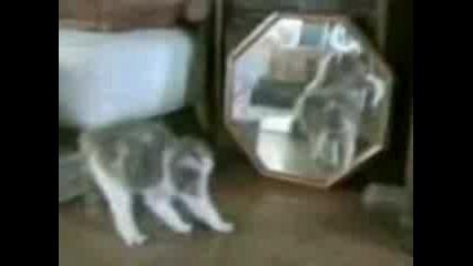 Сладки И Смешни Котки