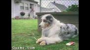 Куче Пушач
