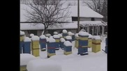 Зимуване при усилена вентилация