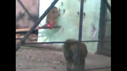 03.11.2011 zoo