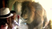 Лъв се опитва да изяде малко момиченце.