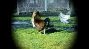 Пилешки Футбол