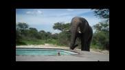 Слон на гости при съседа