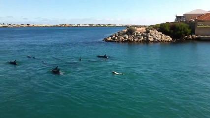 Куче плува заедно с делфините.