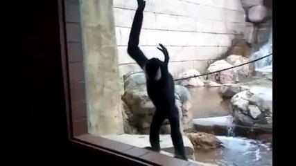 Efc Маймуна прави слънце, но след това Fail
