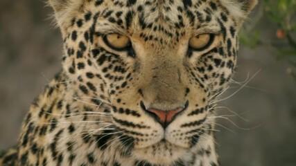 Попарени надежди | Диво царство | NG Wild Bulgaria