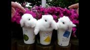 Сладки зайчета в чашки ..