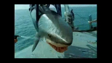 Руснак излиза от устата на акула