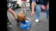 Куче не си дава бирата !