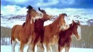 Млади коне срещу възрастни коне ... Кой ще победи?