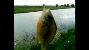 Slanchak nai gadnata riba na sveta