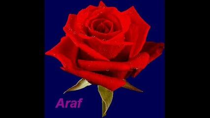 Песен-2 от сериала Морска звезда-araf