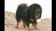 Топ 20 най-опасните породи кучета