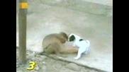 Маймуна Се Хили На Размера На Куче