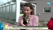 ЗВЕЗДИ В ПРИЮТА: Актьори с кауза осиновяване на бездомни животни