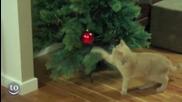 Котки срещу коледни елхи.