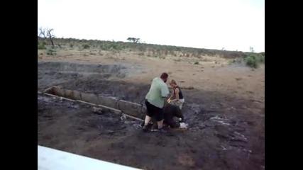 Мъж и жена спасяват малки слончета