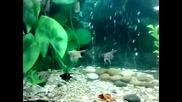 Рибите Ми :)