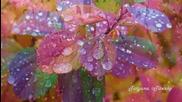 Под мотив дождя
