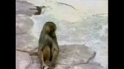 маймунка се стряска от отражението си в огледало* Смях