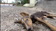 Спасяване на кученце в критично състояние