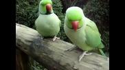 забавни папагалчета