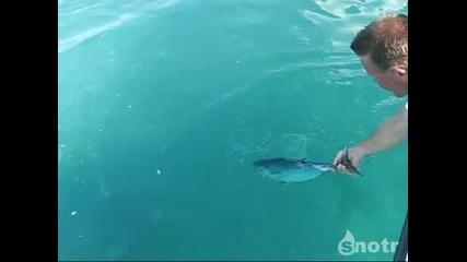 Рибата изчезна за секунди