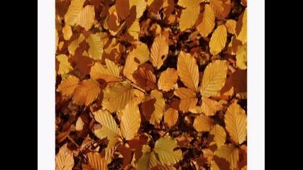 Andrea Bocelli - Есента си отива