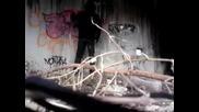 Вандализъм - Oreo Street Bombing