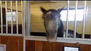 Какво прави този луд кон?