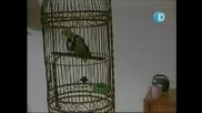 Страшен Филм 2 С Българско Озвучение Част6