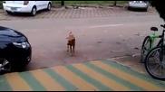 Куче си денси яко до баварец !